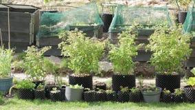 Piccolo giardino in vasi e collari di plastica del pallet Bei ambiti di provenienza della natura video d archivio