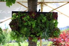 Piccolo giardino verticale Immagini Stock Libere da Diritti