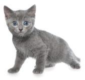 Piccolo gioco del gattino Fotografia Stock Libera da Diritti