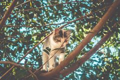 Piccolo giovane gatto che scala sull'albero fotografia stock libera da diritti