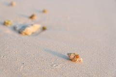 Piccolo granchio Fotografie Stock