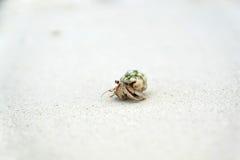 Piccolo granchio Fotografia Stock Libera da Diritti