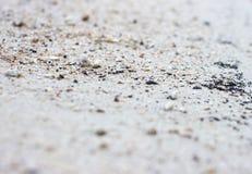 Piccolo granchio sulla spiaggia Fotografia Stock Libera da Diritti
