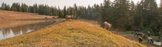 Piccolo gregge dei cavalli selvaggii al bordo erboso di un waterhole di mattina nella gamma del cavallo selvaggio delle montagne  Immagine Stock
