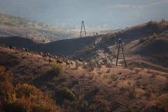 Piccolo gregge delle mucche fotografie stock
