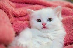 Piccolo hobby bianco piacevole della casa del gatto di animale domestico del gattino immagini stock libere da diritti