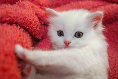 Piccolo hobby bianco piacevole della casa del gatto di animale domestico del gattino immagine stock