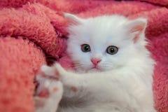 Piccolo hobby bianco piacevole della casa del gatto di animale domestico del gattino immagini stock