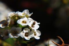 Piccolo insetto Fotografie Stock Libere da Diritti