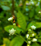 Piccolo insetto vigoroso fotografia stock libera da diritti