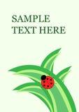 Piccolo ladybug su erba Fotografia Stock