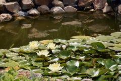 Piccolo lago Fotografia Stock Libera da Diritti