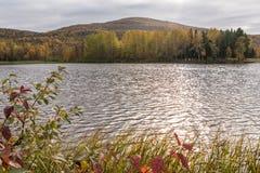 Piccolo lago alla foresta in Alta Fotografia Stock