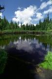 Piccolo lago con gli alberi caduti immagine stock libera da diritti