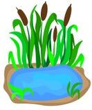 piccolo lago con le canne sulla riva per architettura del p?saggio isolata su un fondo bianco Illustrazione del primo piano di ve royalty illustrazione gratis