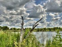 Piccolo lago con legno morto Fotografie Stock