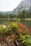 Piccolo lago della foresta in montagne di Alpen, posto per rilassamento e t Fotografie Stock