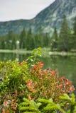 Piccolo lago della foresta in montagne di Alpen, posto per rilassamento e t Fotografia Stock