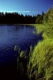 Piccolo lago in Svezia Immagine Stock Libera da Diritti