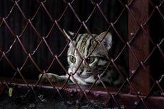 Piccolo leopardo dietro la griglia fotografia stock