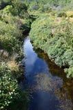 Piccolo letto di insenatura in un ambiente incolto naturale verde fotografia stock libera da diritti