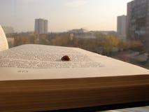 Piccolo lettore sulla finestra fotografie stock
