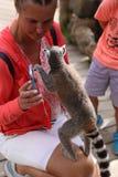 Piccolo mammifero animale divertente Africa delle lemure con la gente Immagine Stock Libera da Diritti