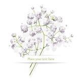 Piccolo mazzo dei fiori bianchi illustrazione vettoriale