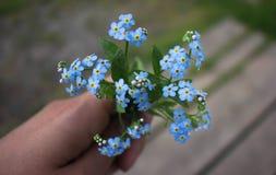 Piccolo mazzo dei nontiscordardime della molla a disposizione Un mazzo dei fiori blu molli a disposizione fotografia stock libera da diritti