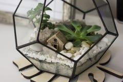 Piccolo modello della casa fra le rocce ed i succulenti in terrario Fotografia Stock Libera da Diritti