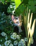 Piccolo multi gattino colorato che guarda stranamente dai cespugli fotografia stock