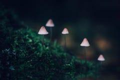 Piccolo mycena tossico bianco del fungo su fondo verde scuro Un gruppo di funghi su una collina coperta di muschio Filopes di Myc immagine stock