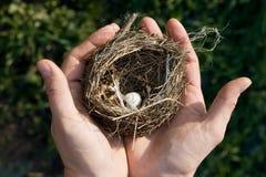 Piccolo nido dell'uccello Fotografia Stock Libera da Diritti