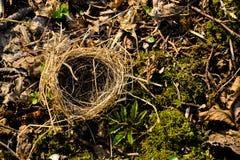 Piccolo nido vuoto Fotografia Stock Libera da Diritti
