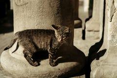 Piccolo outdor grigio sveglio del gattino Fotografia Stock