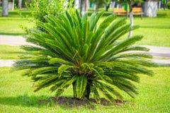 Piccolo paesaggio della palma, flora, Georgia Immagini Stock Libere da Diritti