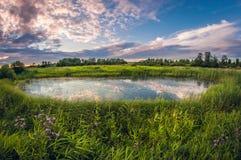 Piccolo palude al tramonto di estate Bello stagno rotondo invaso immagine stock libera da diritti