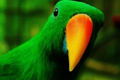 Piccolo pappagallo Fotografia Stock