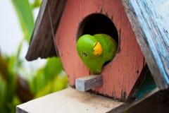Piccolo pappagallo nel giardino immagini stock