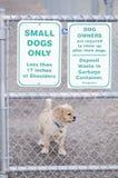 Piccolo parco dei cani soltanto Immagine Stock