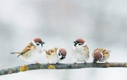 Piccolo passero divertente degli uccelli di bambino che si siede su un ramo a garde fotografie stock libere da diritti