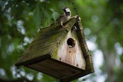 Piccolo passero maschio appollaiato sopra il suo tetto fotografia stock