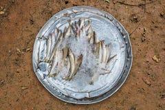 Piccolo pesce fresco crudo dei frutti di mare freddi Fotografia Stock Libera da Diritti
