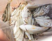 Piccolo pesce o Fotografie Stock