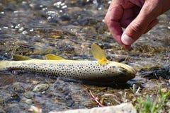 Piccolo pesce pescato sul gancio fotografie stock
