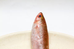 Piccolo pesce tre sul piatto Fotografia Stock