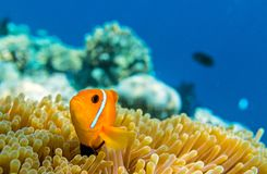 Piccolo pesce in un oceano fotografie stock