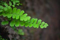 Piccolo pianta nel sason piovoso del Th del Kerala immagine stock libera da diritti