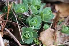 Piccolo pianta verde dopo la pioggia immagini stock