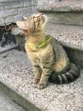 Piccolo picchiettio del gatto fotografie stock libere da diritti